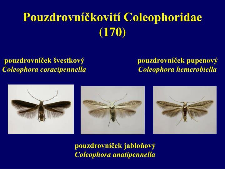 Pouzdrovníčkovití Coleophoridae     (170)