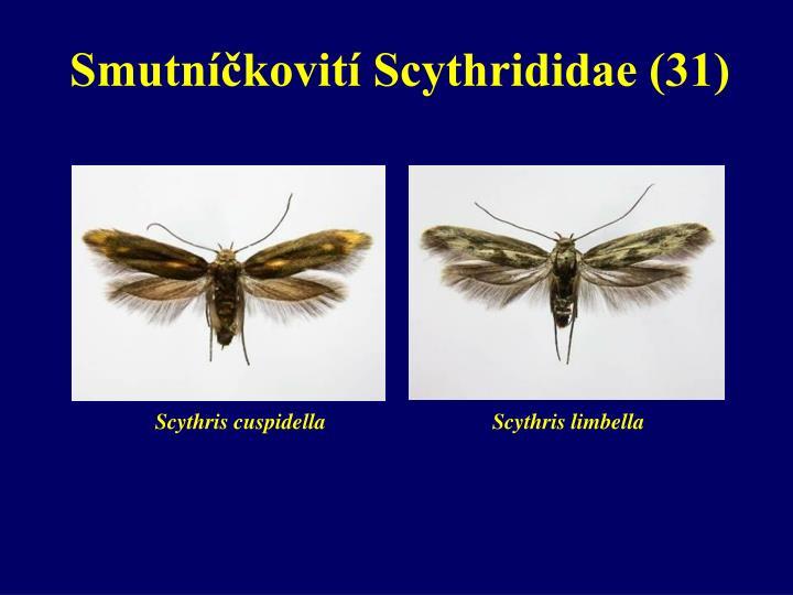 Smutníčkovití Scythrididae (31)