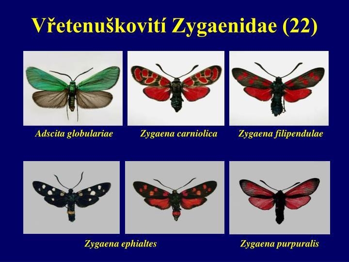 Vřetenuškovití Zygaenidae (22)