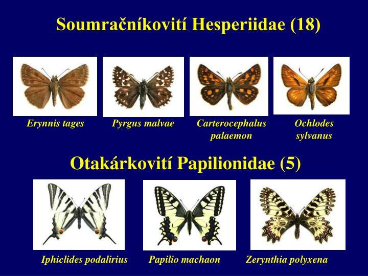 Soumračníkovití Hesperiidae (18)