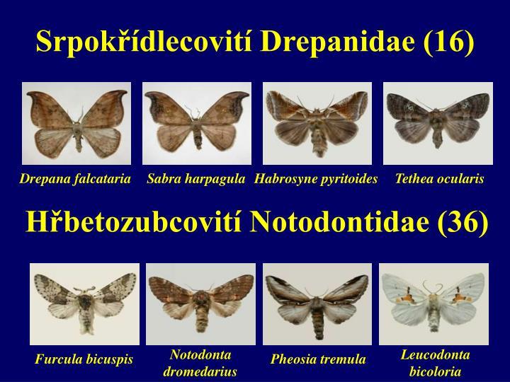 Srpokřídlecovití Drepanidae (16)