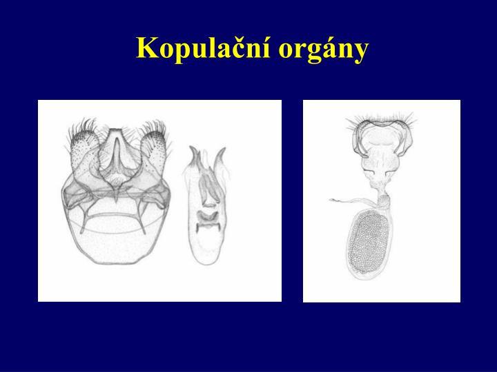 Kopulační orgány