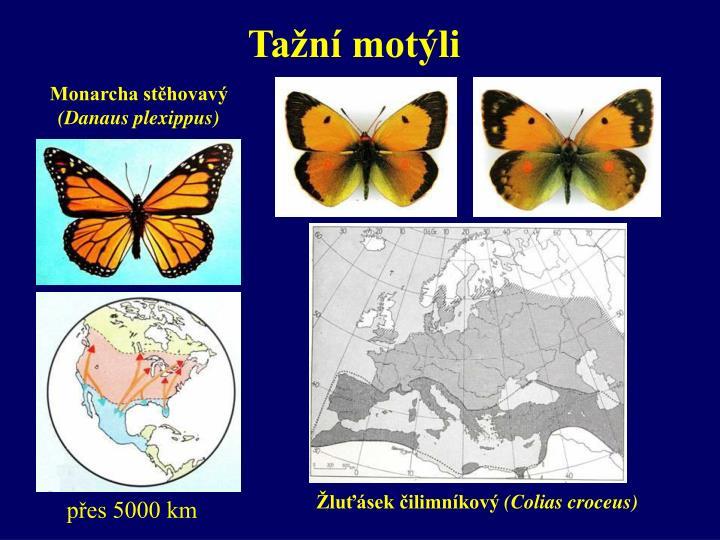 Tažní motýli