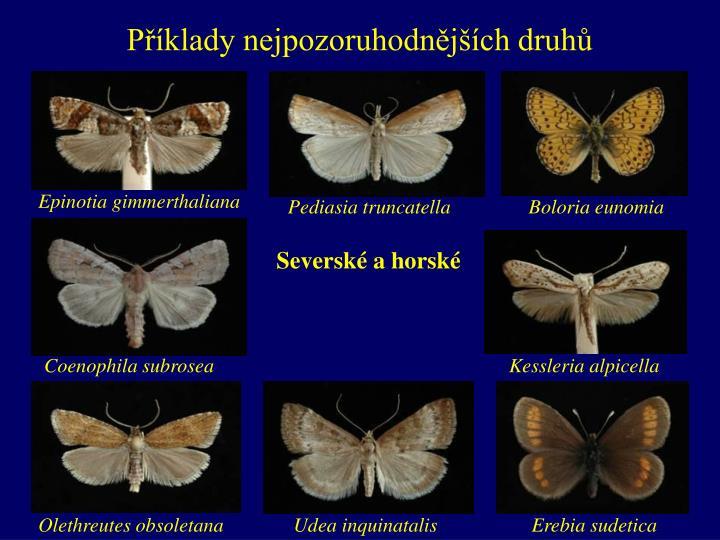 Příklady nejpozoruhodnějších druhů