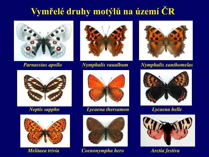 Vymřelé druhy motýlů na území ČR
