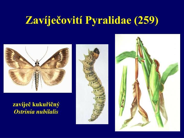 Zavíječovití Pyralidae (259)