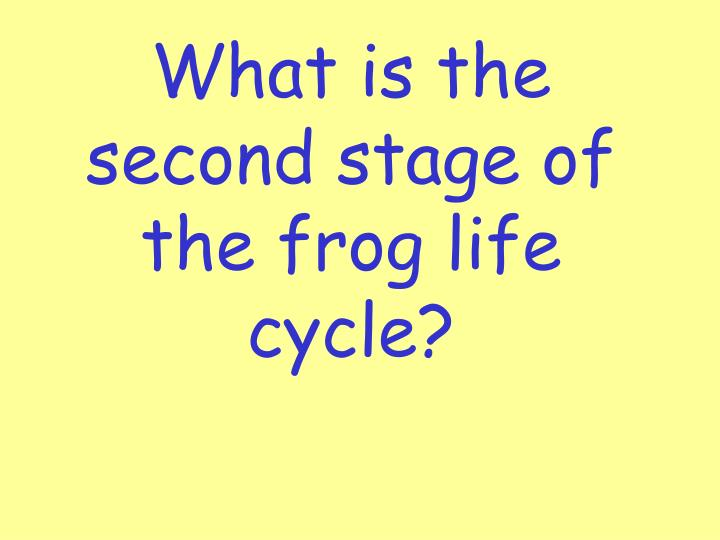 What is the second stage of the frog life cycle?
