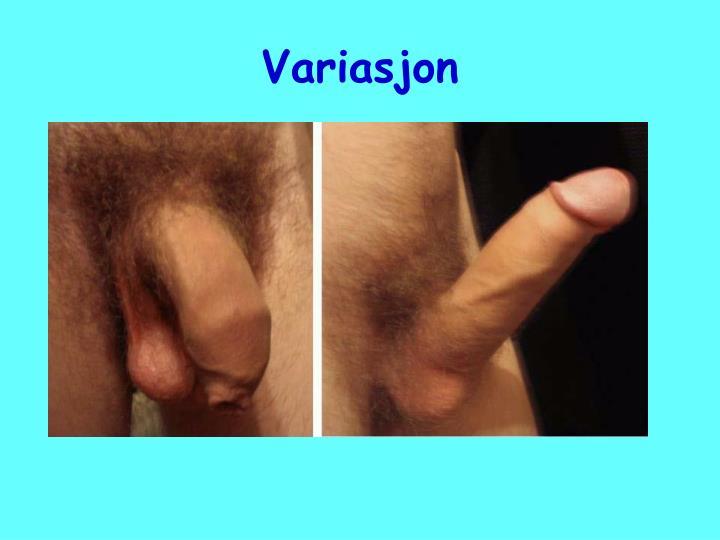 erotisk undertøy gjennomsnitt penis lengde