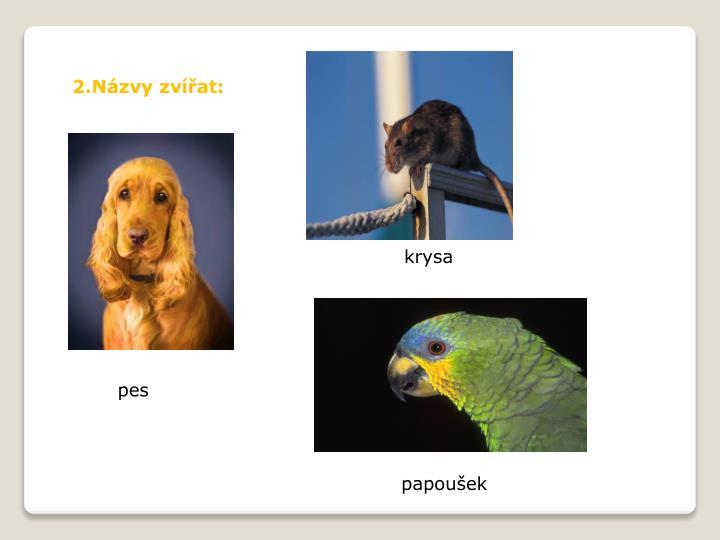 2.Názvy zvířat: