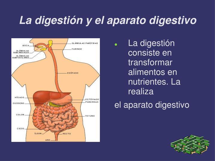 La digestión y el aparato digestivo