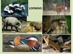 loomad1