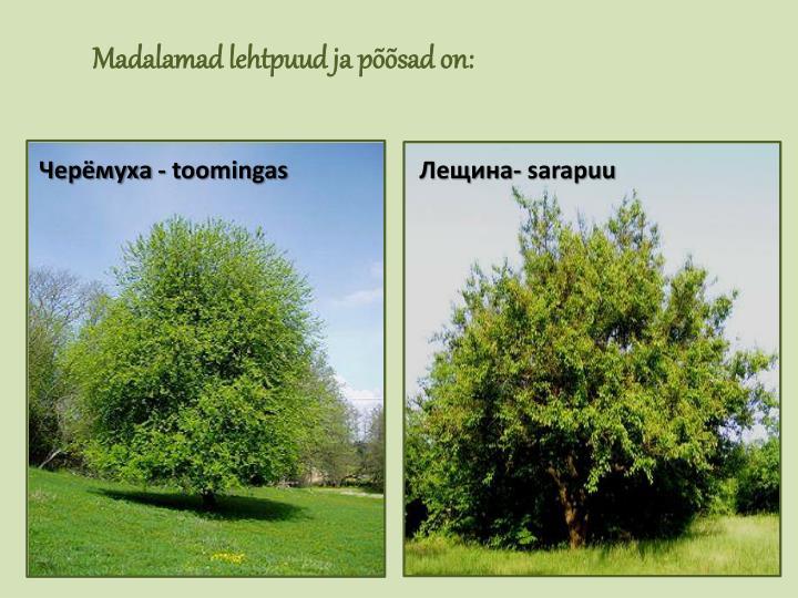 Madalamad lehtpuud ja põõsad on: