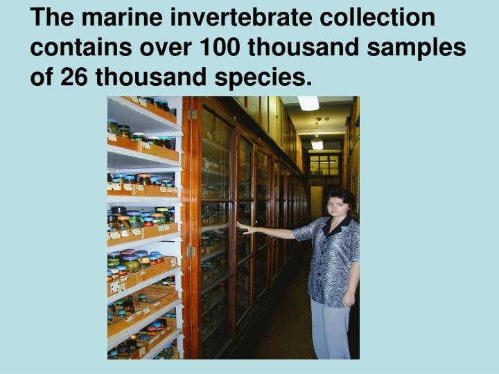 The marine invertebrate collection contains over 100 thousand samples of 26 thousand species.