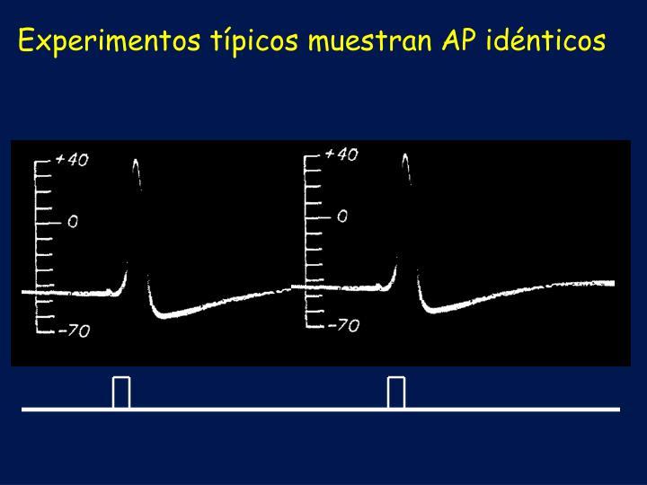 Experimentos típicos muestran AP idénticos