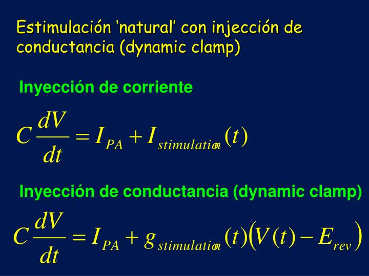 Estimulación 'natural' con injección de conductancia (dynamic clamp)