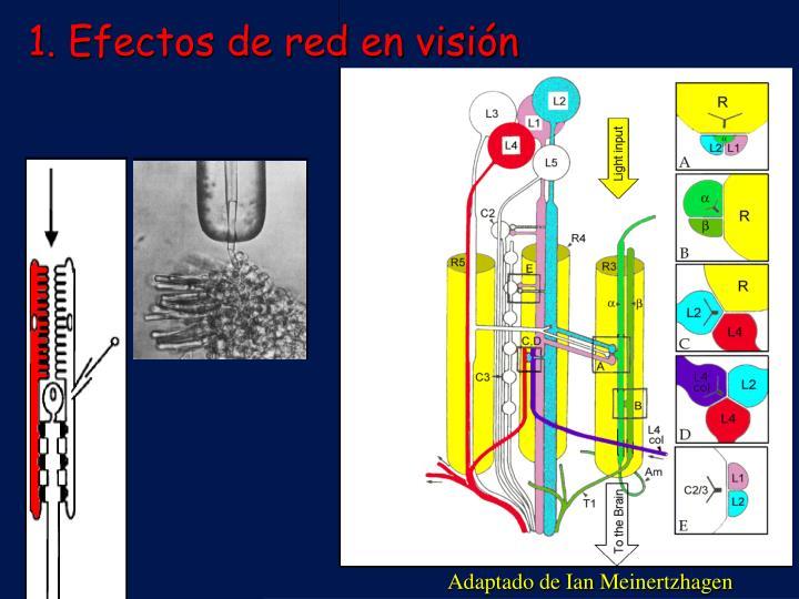 Efectos de red en visión