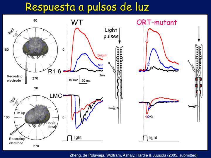 Respuesta a pulsos de luz