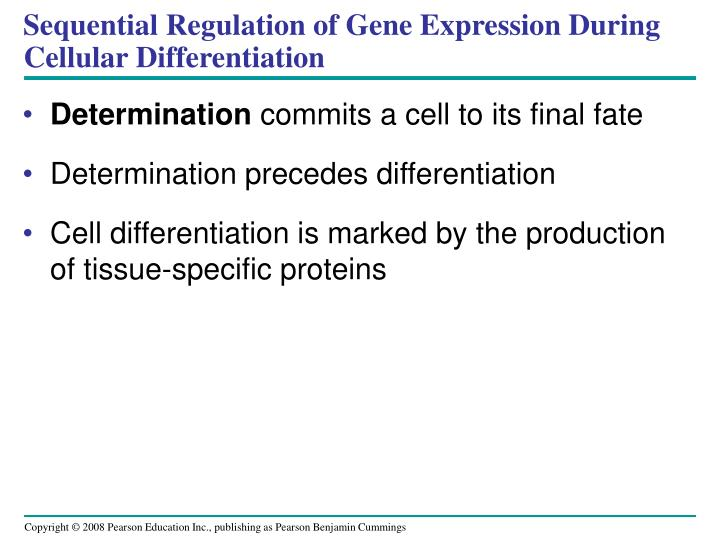 Sequential Regulation of Gene Expression During Cellular Differentiation