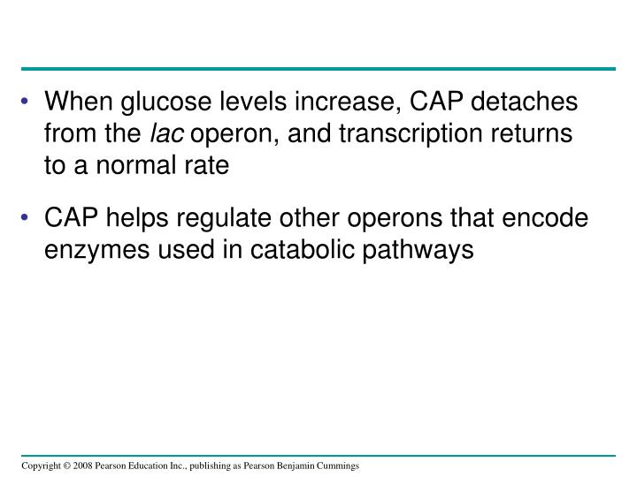 When glucose levels increase, CAP detaches from the