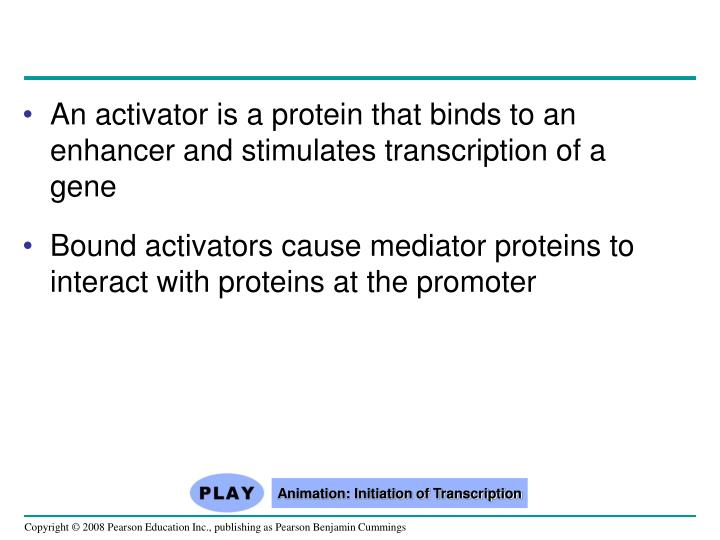 An activator is a protein that binds to an enhancer and stimulates transcription of a gene