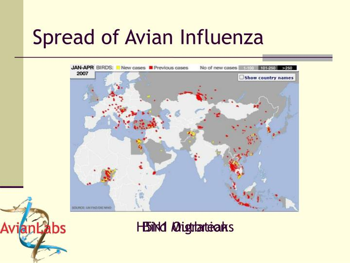 Spread of Avian Influenza