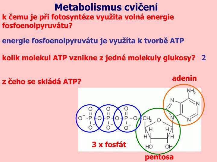 Metabolismus cvičení