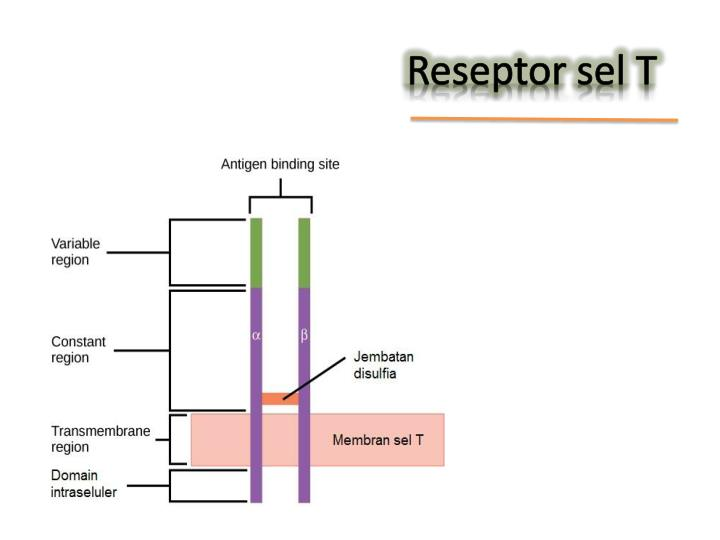 Reseptor sel T