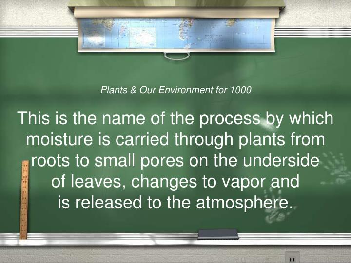Plants & Our Environment for 1000