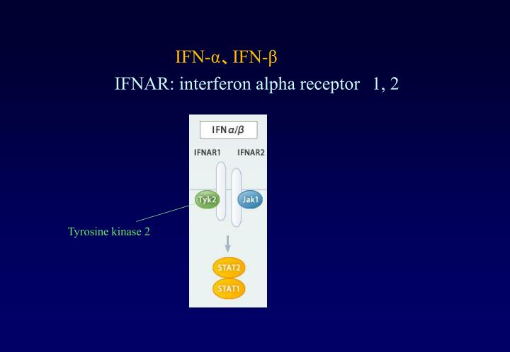 IFN-α