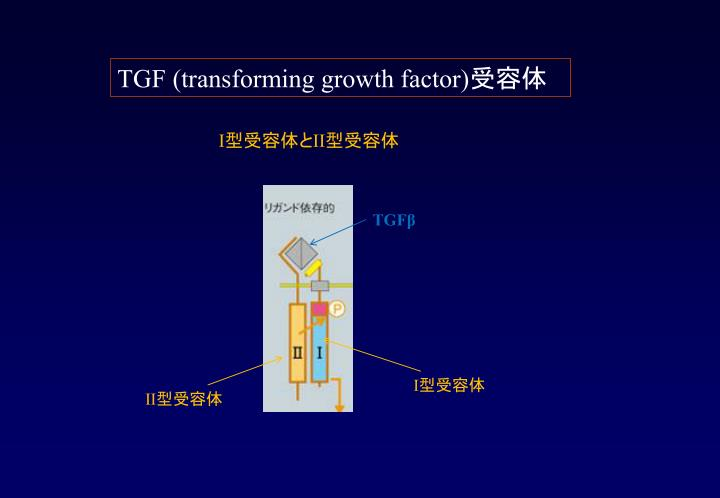 TGF (transforming growth factor)