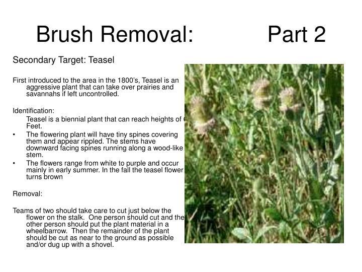 Secondary Target: Teasel