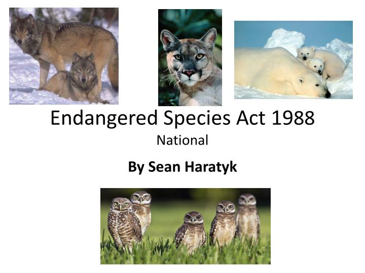 endangered species act essays Essays writer about the endangered species act and so much more this activity will require this act repealed the endangered species conservation.