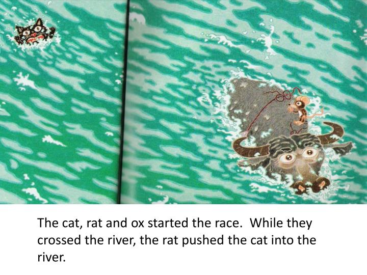 The cat, rat and ox started the race.  While they crossed the river, the rat pushed the cat into the river.