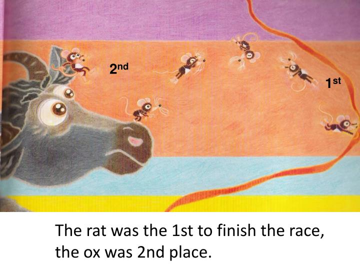The rat was the 1st to finish the race, the ox was 2nd place.