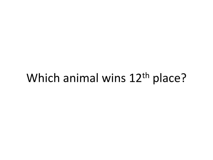 Which animal wins 12