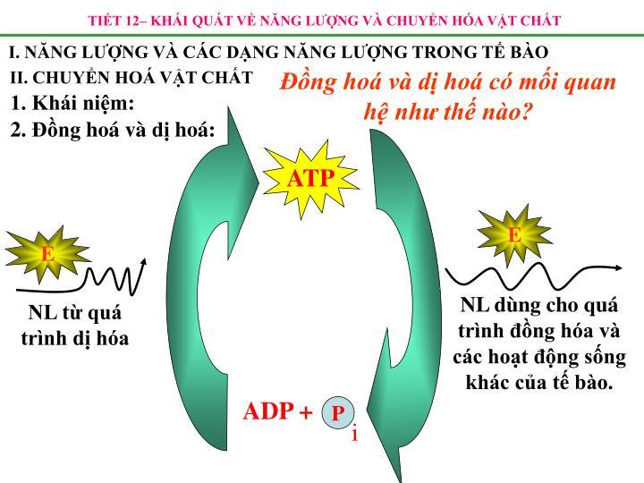 ADP +