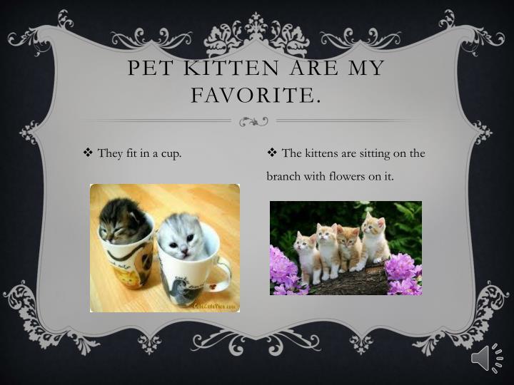 Pet kitten are my favorite.