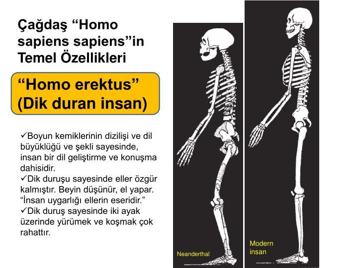 "Çağdaş ""Homo sapiens sapiens""in"