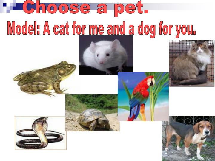 Choose a pet.