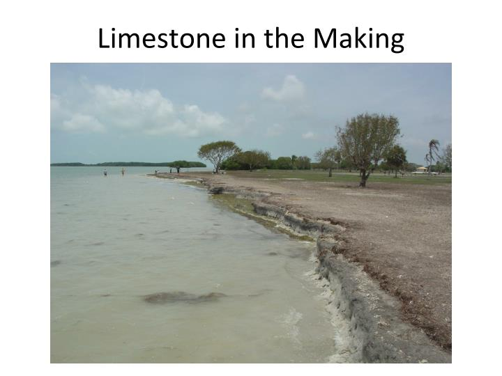 Limestone in the Making