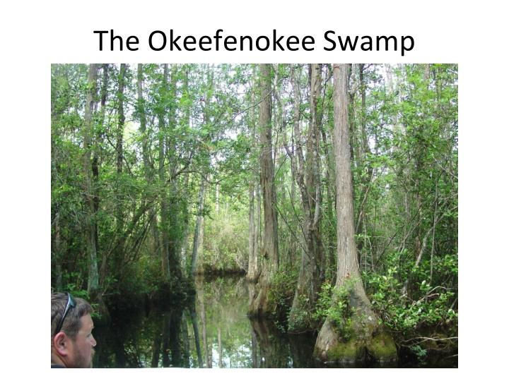 The Okeefenokee Swamp