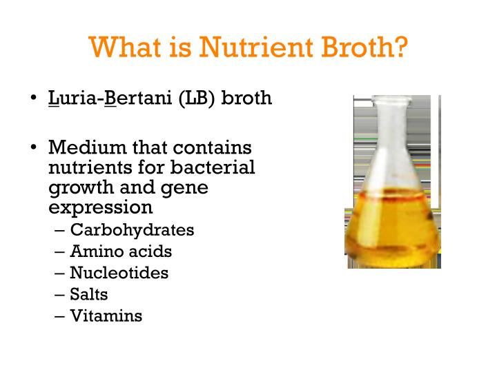 What is Nutrient Broth?