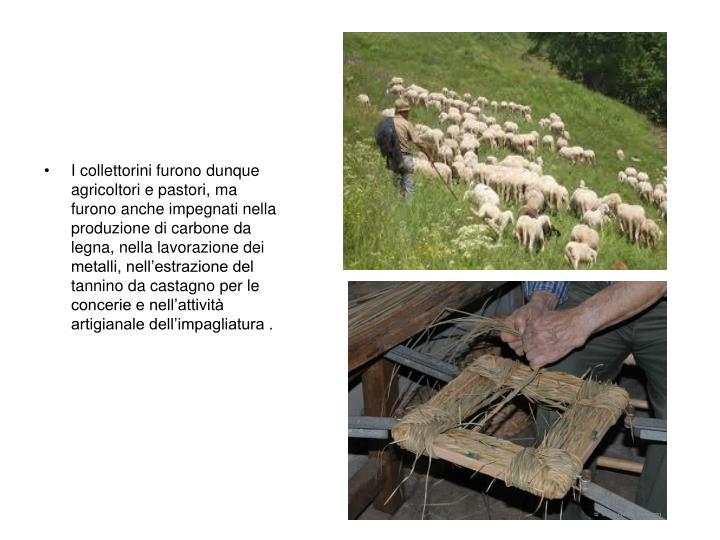 I collettorini furono dunque agricoltori e pastori, ma furono anche impegnati nella produzione di carbone da legna, nella lavorazione dei metalli, nell'estrazione del tannino da castagno per le concerie e nell'attività artigianale dell'impagliatura .