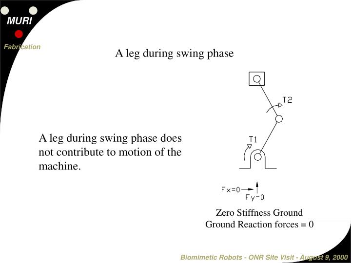 A leg during swing phase