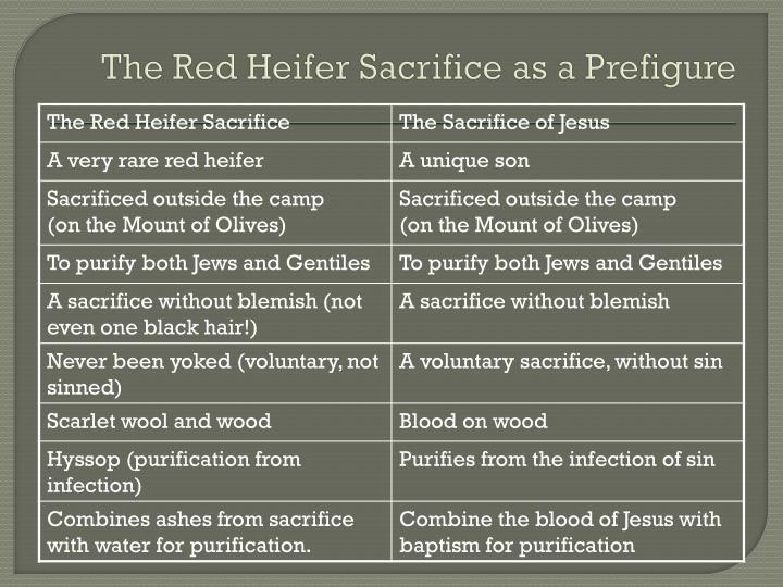 The Red Heifer Sacrifice as a Prefigure