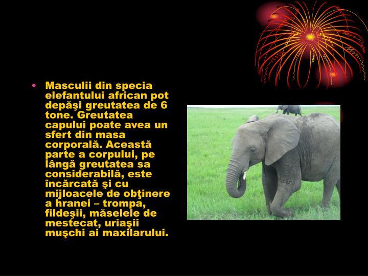 Masculii din specia elefantului african pot depi greutatea de 6 tone. Greutatea capului poate avea un sfert din masa corporal. Aceast parte a corpului, pe lng greutatea sa considerabil, este ncrcat i cu mijloacele de obinere a hranei  trompa, fildeii, mselele de mestecat, uriaii muchi ai maxilarului.