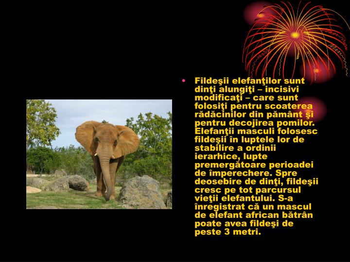 Fildeii elefanilor sunt dini alungii  incisivi modificai  care sunt folosii pentru scoaterea rdcinilor din pmnt i pentru decojirea pomilor. Elefanii masculi folosesc fildeii n luptele lor de stabilire a ordinii ierarhice, lupte premergtoare perioadei de mperechere. Spre deosebire de dini, fildeii cresc pe tot parcursul vieii elefantului. S-a nregistrat c un mascul de elefant african btrn poate avea fildei de peste 3 metri.