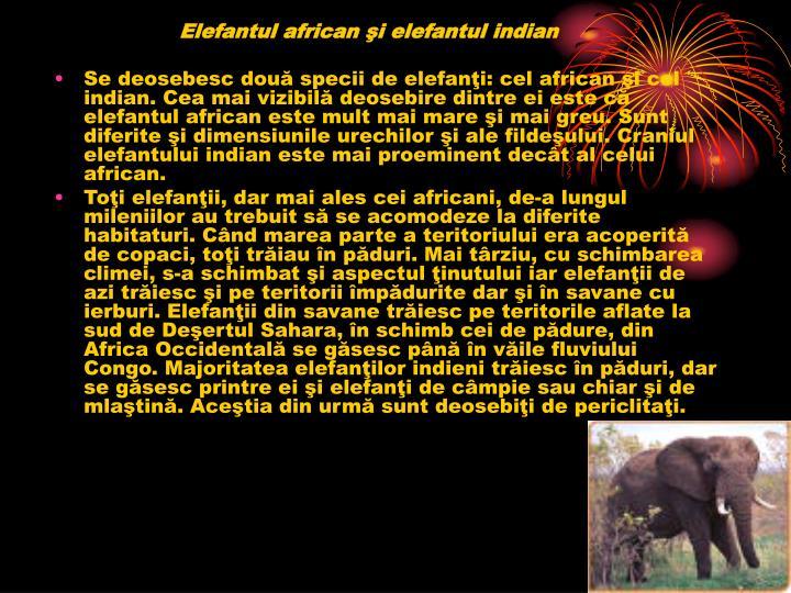 Elefantul african şi elefantul indian