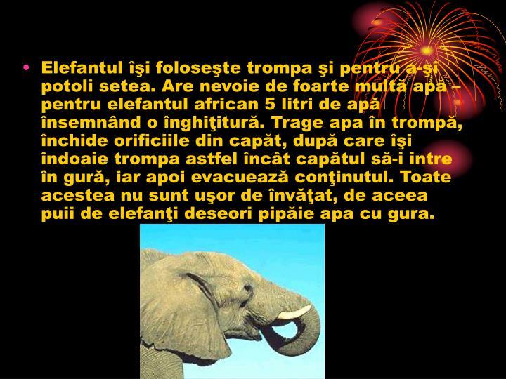 Elefantul îşi foloseşte trompa şi pentru a-şi potoli setea. Are nevoie de foarte multă apă – pentru elefantul african 5 litri de apă însemnând o înghiţitură. Trage apa în trompă, închide orificiile din capăt, după care îşi îndoaie trompa astfel încât capătul să-i intre în gură, iar apoi evacuează conţinutul. Toate acestea nu sunt uşor de învăţat, de aceea puii de elefanţi deseori pipăie apa cu gura.