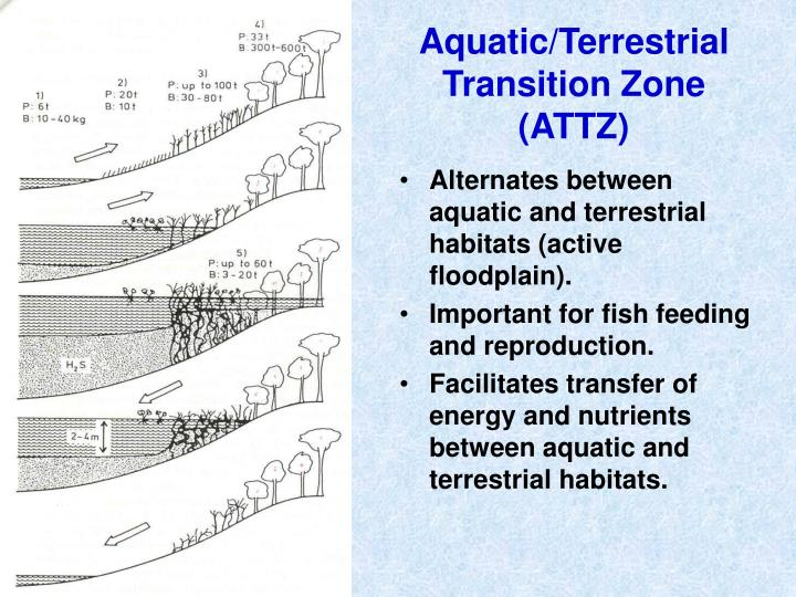 Aquatic/Terrestrial Transition Zone (ATTZ)